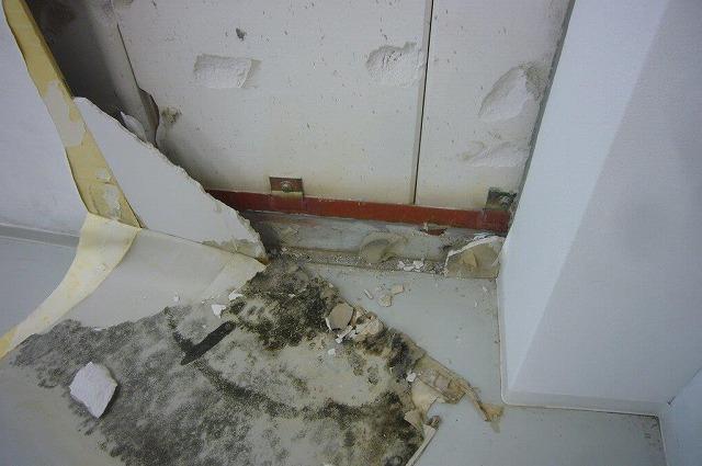 壁の内部にカビが発生 雨漏り