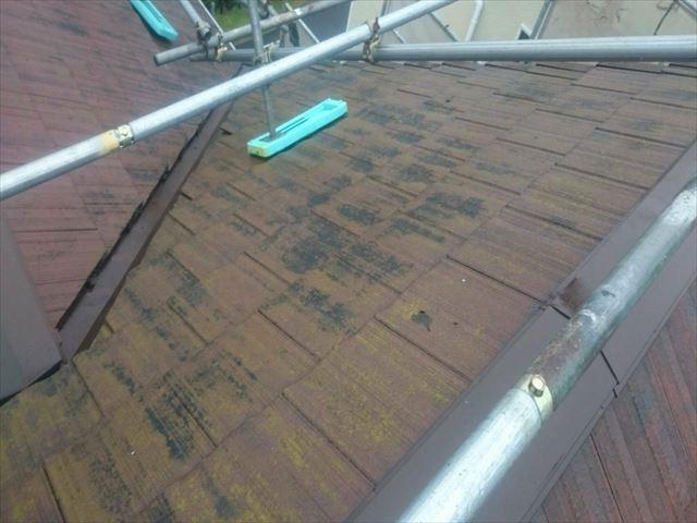 屋根 苔汚れ